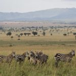 Uganda's Wildest Places, Uganda's Wildest Places – 10 Days, African Safari Experts, African Safari Experts