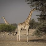 Primates & Predators, Primates & Predators – 12 Days, African Safari Experts