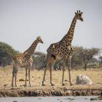 Nxai Pans, Nxai Pans and Baines Baobabs – 7 Days, African Safari Experts