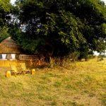 grass hut, africa, trees, zambia, africa, kuyenda, african safari experts, south luangwa