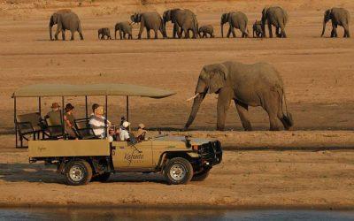 , Blog, African Safari Experts