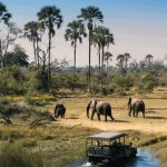 elephants, palm trees, bush, africa, botswana, african, safari, experts