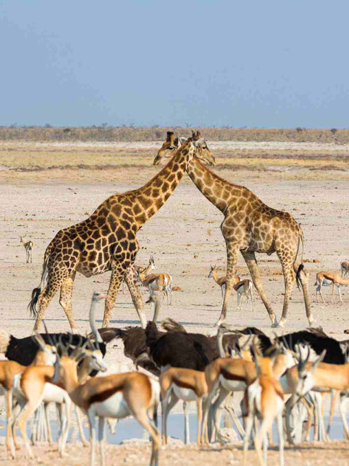 namibia tours and packages, Namibia Tours and Packages, African Safari Experts, African Safari Experts