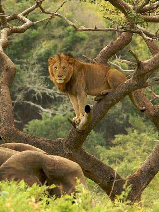 , South Africa Tours and Packages, African Safari Experts