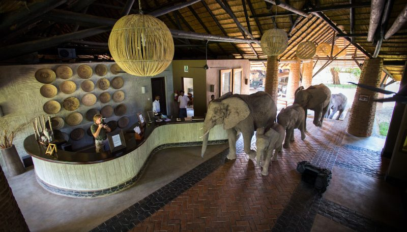 elephants, reception, zambia, bushcamp company, south luangwa, africa, african safari experts