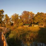 Wooden walkways connecting rooms and main area at Gunns Camp in the Okavango Delta