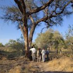 People stunding under a tree with guide at Gunns Camp in the Okavango Delta