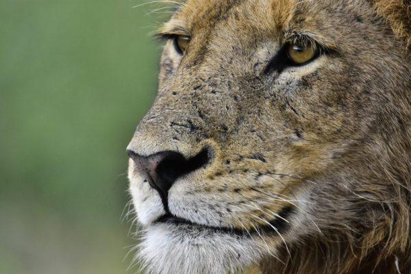 Mobile safari, 9 Day Mobile Safari – Botswana Deserts, African Safari Experts, African Safari Experts
