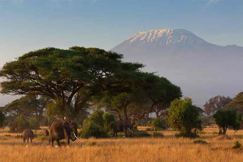 Escape to Kenya this Summer!