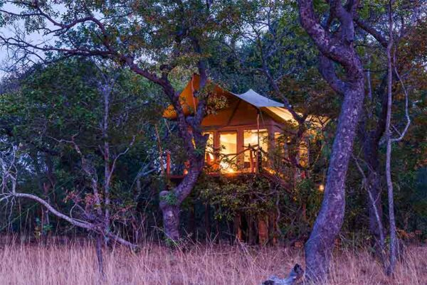 Fig Tree Bush Camp