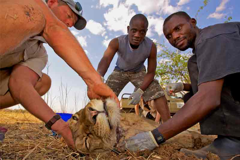 Removing a snare to conserve wildlife