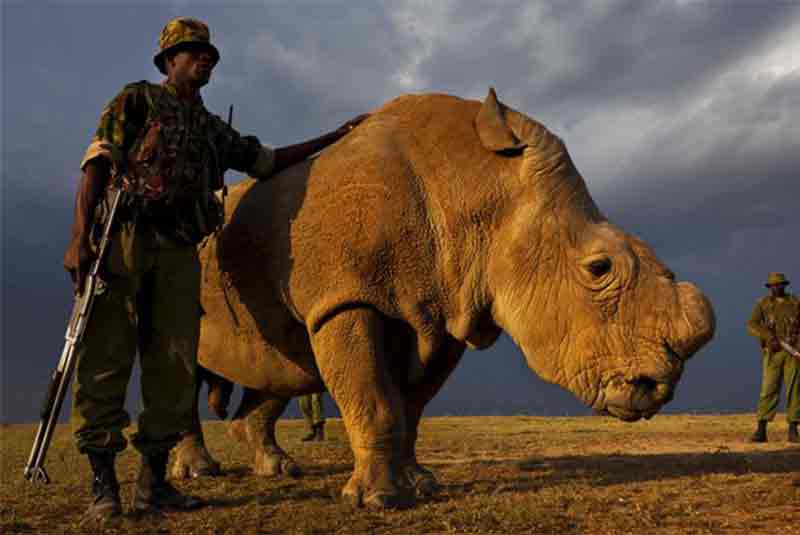Conserving rhino with travel funds