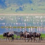 Animals walk along a lake edge