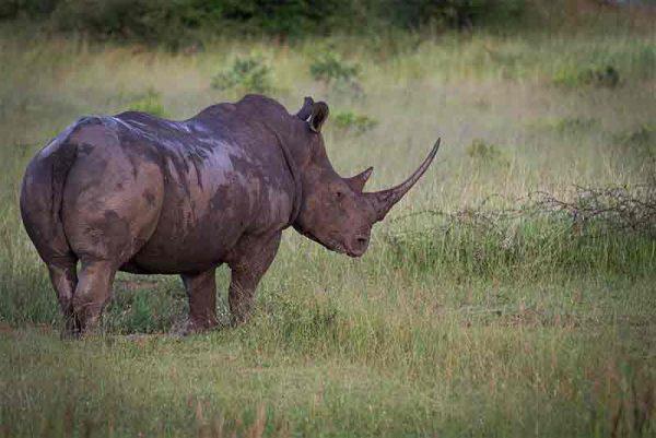 Londolozi Tree Camp, Londolozi Tree Camp, African Safari Experts, African Safari Experts