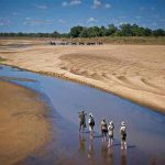 people walking in a shallow river with elephants in the distance