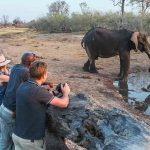 An elephant at a waterhole with guests watching