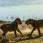 Mara Plains Camp, Mara Plains Camp, African Safari Experts, African Safari Experts