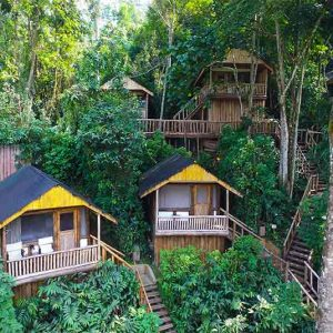 Chalets set amongst trees at Buhoma Lodge