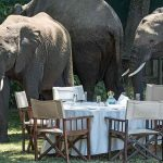 Elephants surround a table laid out for lunch