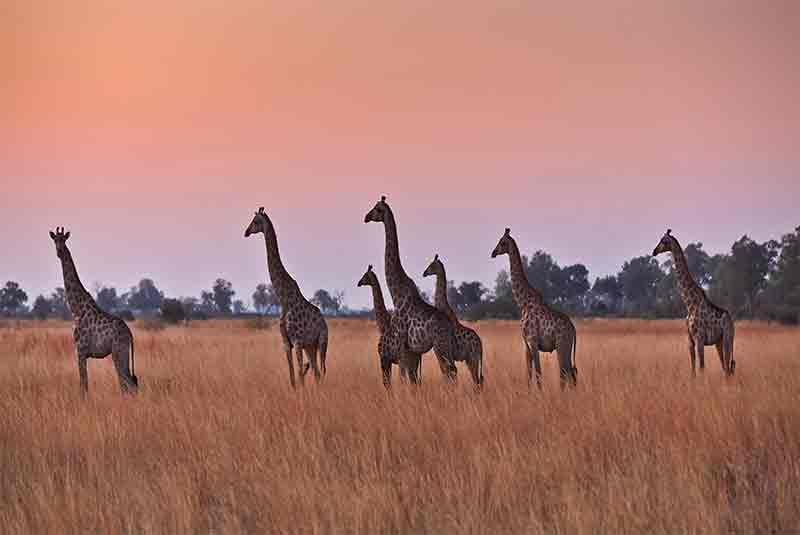 Kwando Nxai Pan, Kwando Nxai Pan, African Safari Experts, African Safari Experts