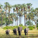 Mombo, Mombo, African Safari Experts, African Safari Experts
