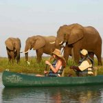 people in a canoe on a river paddling past feeding elephants