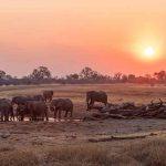 An elephant herd at a waterhole at dusk