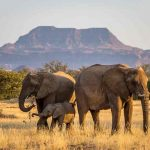 A small herd of Elephants in Namibia