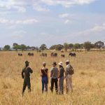 Guests stand in long grass observing a herd of elephant