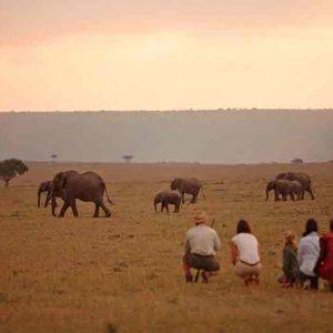 Elephant Pepper Camp