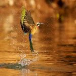 a bird hovering over a river