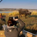 people on a boat photographing a Cape Buffalo