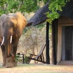 an elephant walking past a chalet