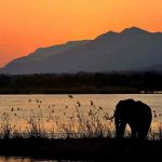 A elephant silhouetted at sunset at mana pools