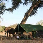 An elephant close to a tent with a person watching