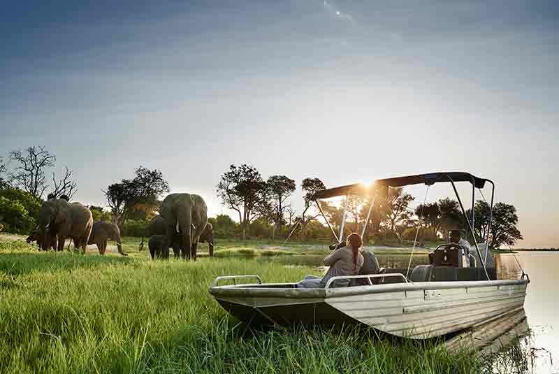 A boat with people parked close to a herd of Elephant