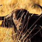 Singita Sweni, Singita Sweni, African Safari Experts, African Safari Experts