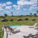 A swimming pool with elephants walking past