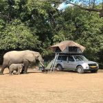 An elephant and her calf feeding close to a vehicle