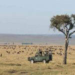 A safari vehicle on an open plain surrounded by animals