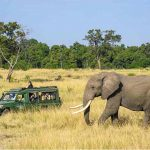 An Elephant walking past a vehicle in the Masai Mara