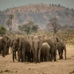 A herd of elephant in a dry river bed