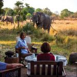 people sitting in chairs with an elephant feeding close by