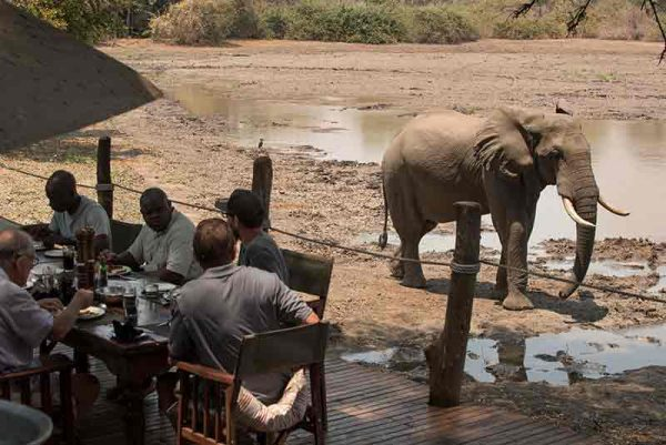 Guests at lunch on the deck of Kanga Camp with an Elephant close to the deck