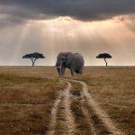 An Elephant standing on a vast open plain