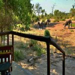 A small private deck close to a waterhole with elephants drinking