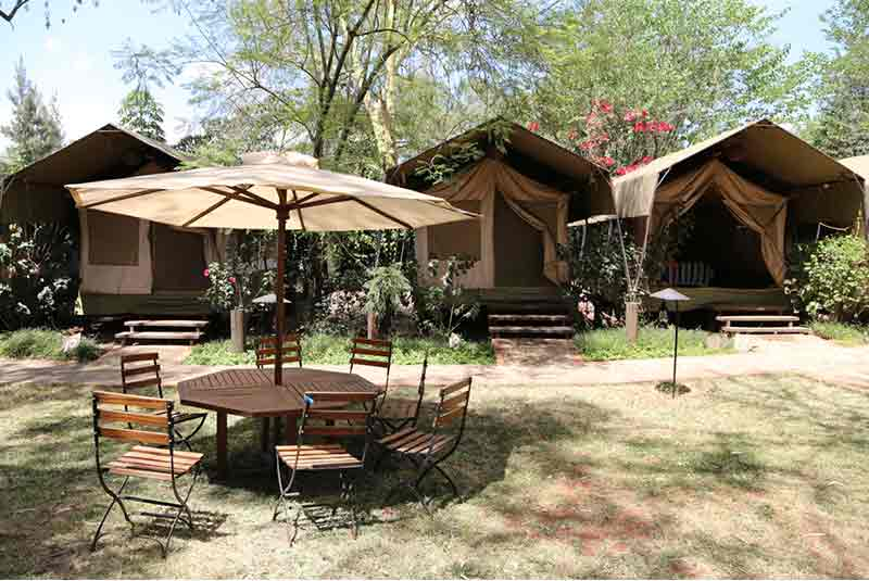 tents set in a garden at wildebeest camp