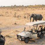 An Elephant wanders past a vehicle in Hwange