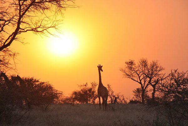 Best of Zambia Safari, Best of Zambia Safari – 14 Days, African Safari Experts, African Safari Experts