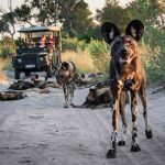 Abu Camp, Abu Camp – Okavango, African Safari Experts, African Safari Experts